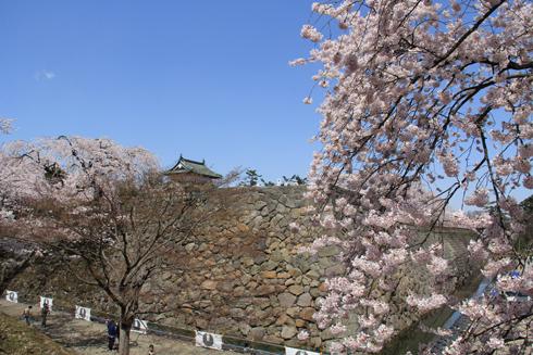 弘前桜祭り2016(1)-7