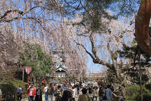 弘前桜祭り2016(1)-8