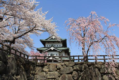 弘前桜祭り2016(1)-10