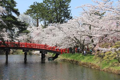 弘前桜祭り2016(2)-4