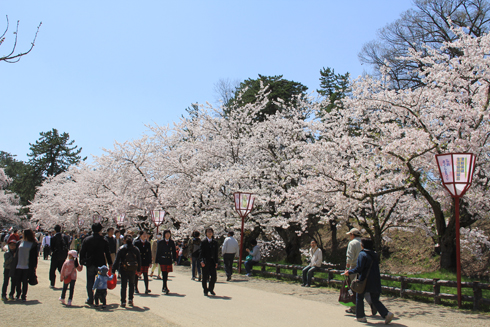 弘前桜祭り2016(2)-5