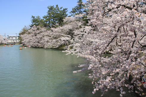 弘前桜祭り2016(2)-7