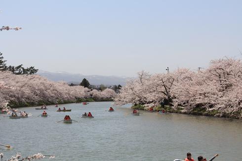 弘前桜祭り2016(2)-8