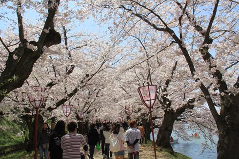 弘前桜祭り2016(2)-9
