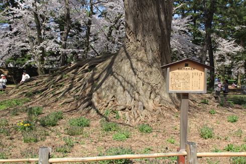 弘前桜祭り2016(2)-11