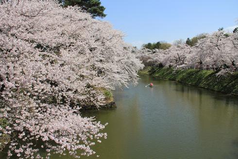 弘前桜祭り2016(2)-12