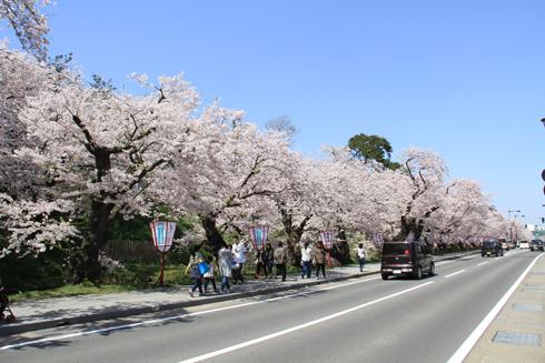 弘前桜祭り2016(2)-15