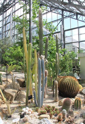 筑波実験植物園2016(1)-5