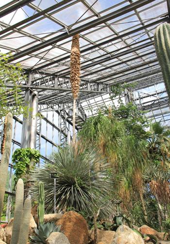 筑波実験植物園2016(1)-8