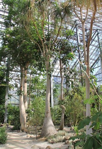 筑波実験植物園2016(1)-9