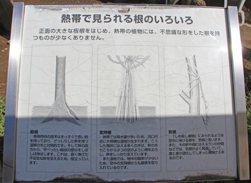 筑波実験植物園2016(1)-11