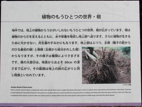 筑波実験植物園2016(1)-13