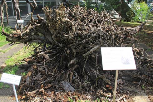 筑波実験植物園2016(1)-14