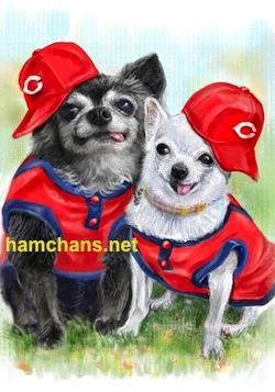 カープ犬服