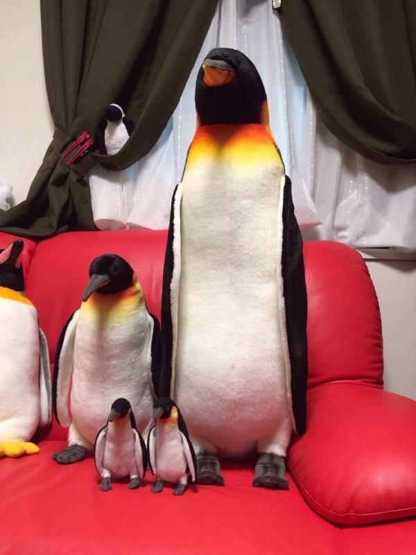ペンギン160822