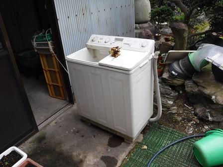 1洗濯機で芋荒い