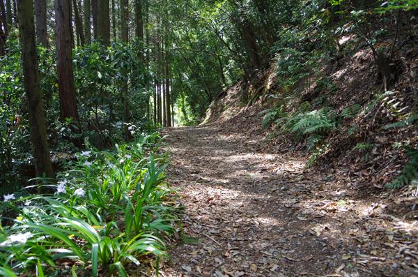 日和田山43