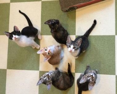 子猫みんな