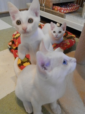 白3兄弟3