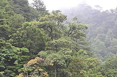 中国南部の森