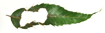 ムササビの葉の3回折り2