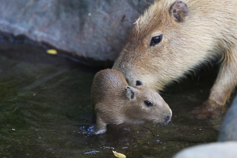 親が見守る中、泳ぎの特訓