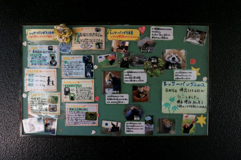 とべ動物園のレッサーパンダ舎の掲示板