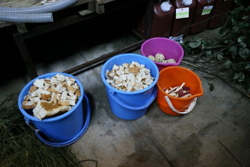 アフリカゾウ舎内のオレンジ色のバケツの中にありますお芋さんです。