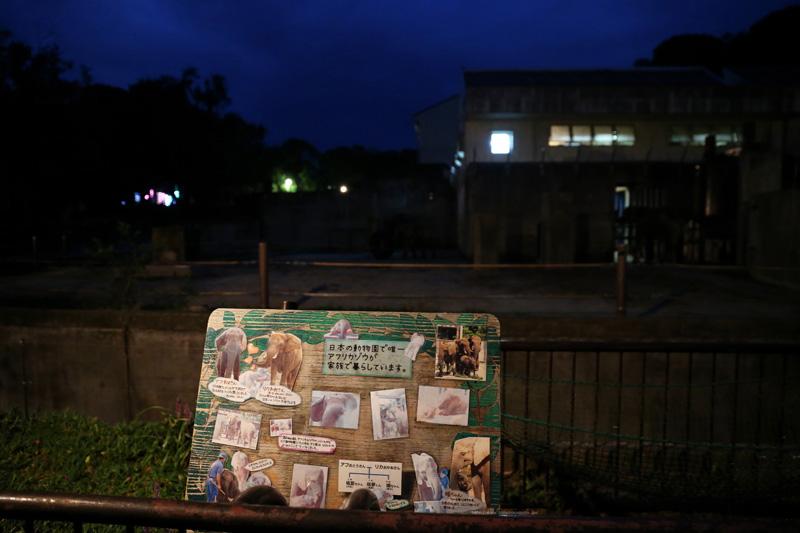 閉園前、夜のアフリカゾウ舎です。(撮影カメラ機種名 Canon EOS 1DX レンズ EF24-70mm f/2.8L II USM ISO感度 6400)