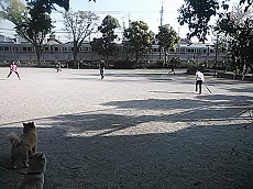 NCM_3374 (1)