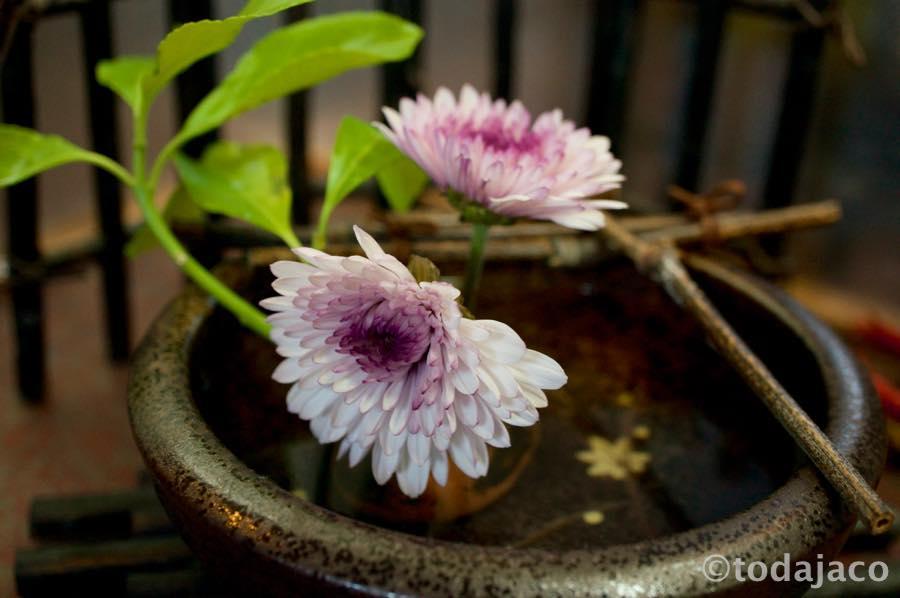 ロビーの菊