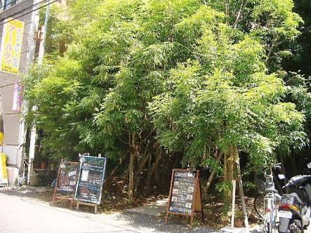 神戸の森林でカフェコンサルティングデー1