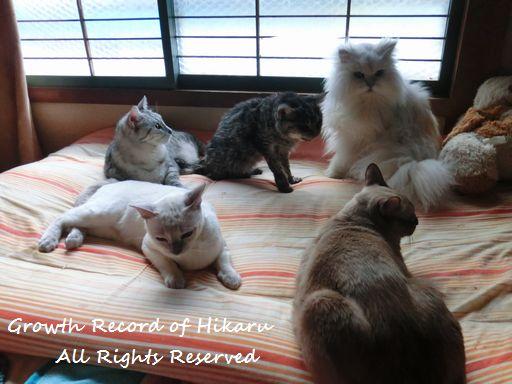 fluffy&yutaka&hikaru&miu&rayleigh 14