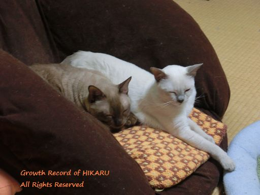 hikaru&miu 353