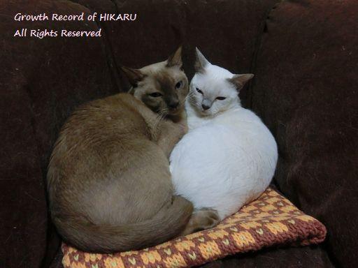 hikaru&miu 354