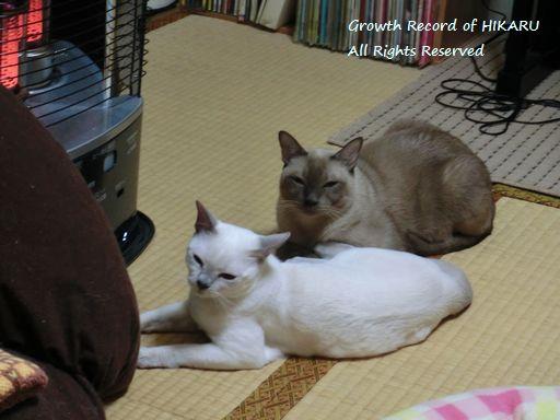 hikaru&miu 355