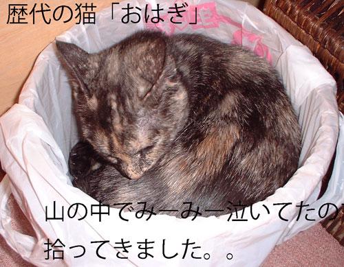 おはぎ、ごみ箱2