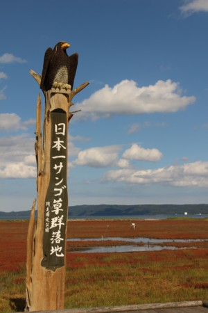 日本一サンゴ草