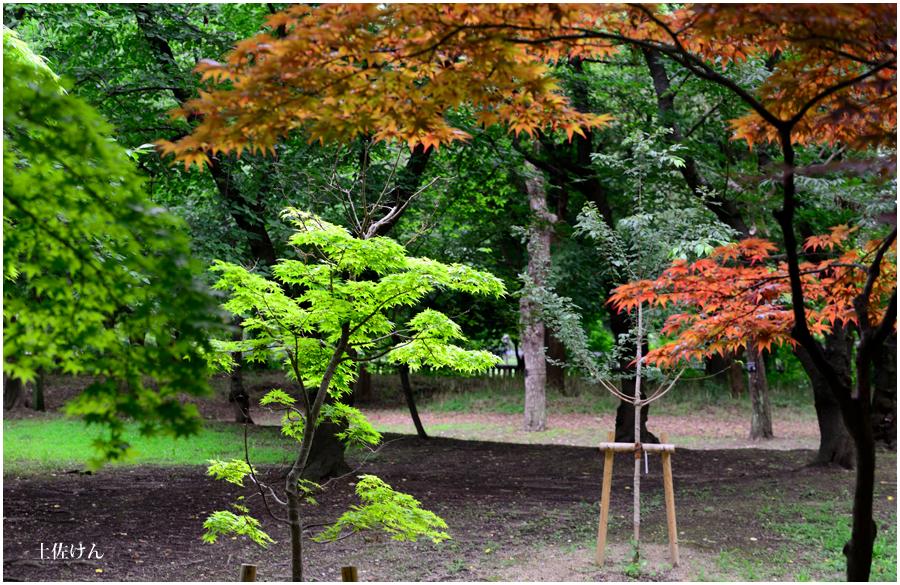 長居植物園4