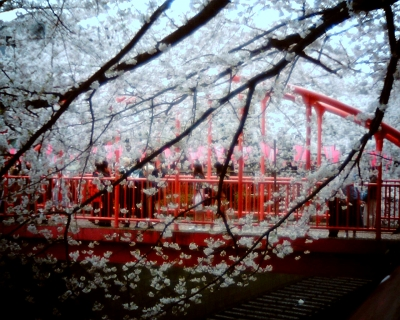 目黒川・中の橋と桜:R2