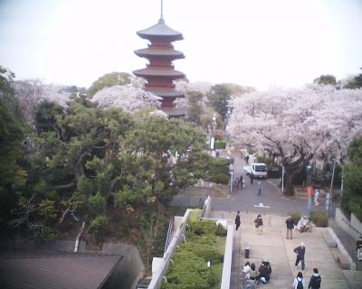 五重塔と桜・池上本門寺:R2