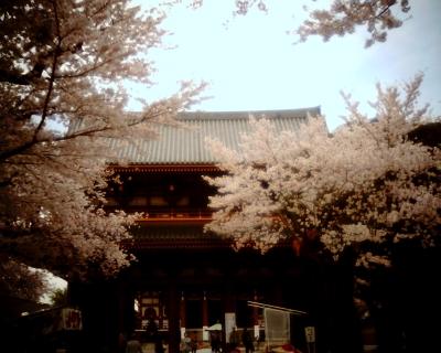 仁王門と桜・池上本門寺:Entry