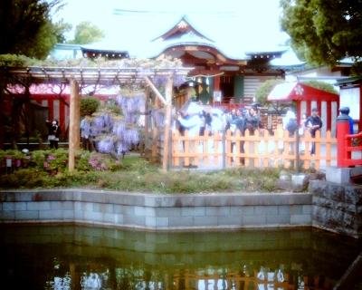 亀戸天神社のフジ:Entry