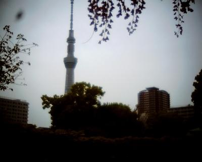 藤と東京スカイツリー・亀戸天神社:Entry