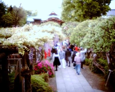 亀戸天神社:Entry