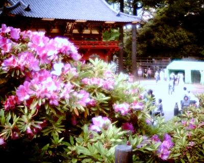 ツツジ・根津神社:Entry