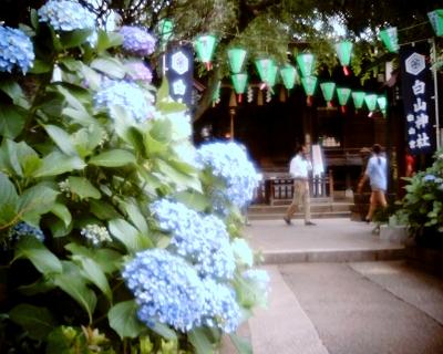 あじさい祭り・白山神社:Entry