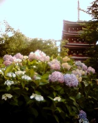 五重塔とアジサイ・長谷山本土寺:Entry