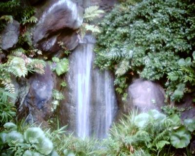 滝とイワタバコ・皇居東御苑:Entry