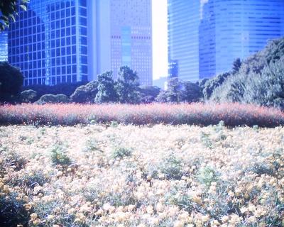 都会の真中で・浜離宮恩賜庭園:R2